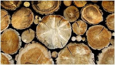 Тендеры в деревообрабатывающей промышленности Словении